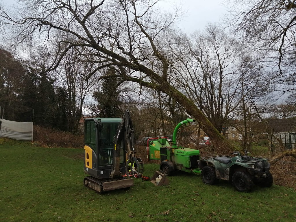 Fallen Tree To Safely Fell JC Arborists