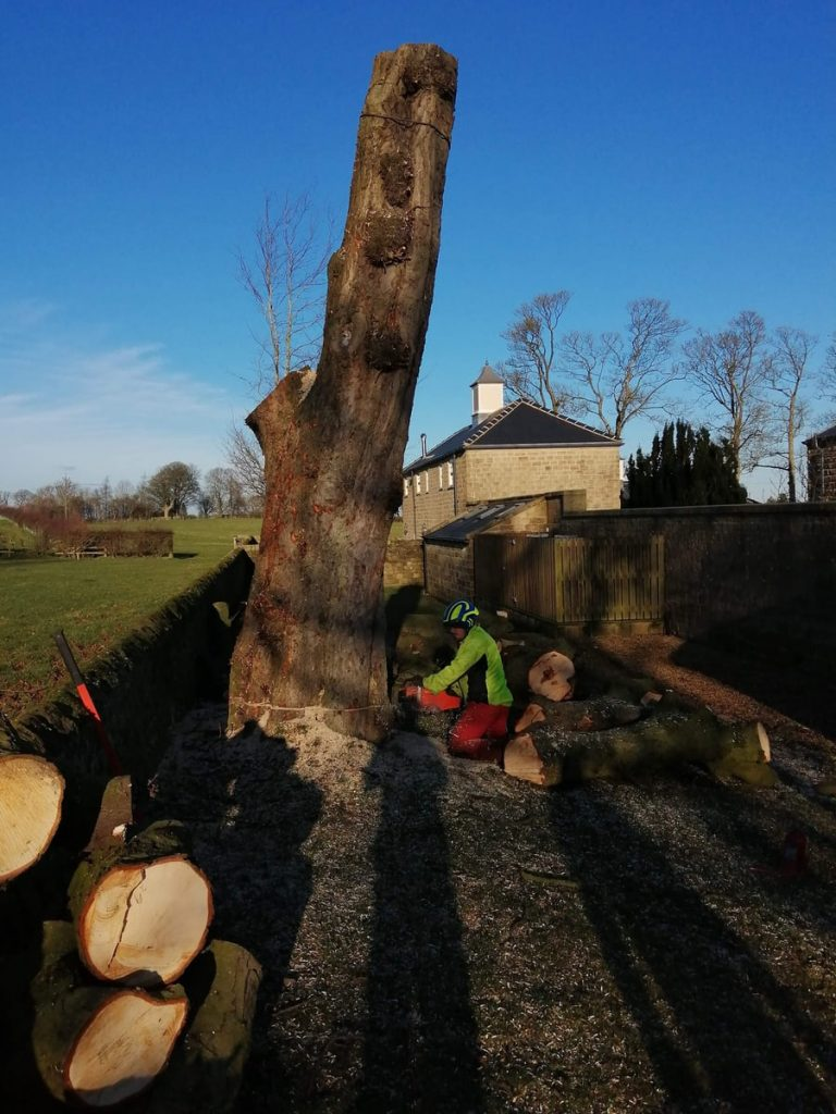 Harrogate Tree Surgeon JC Arborists Tree Fell