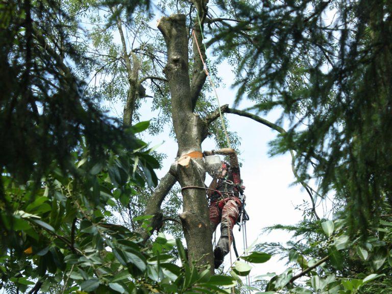 JC Arborists Tree Fell
