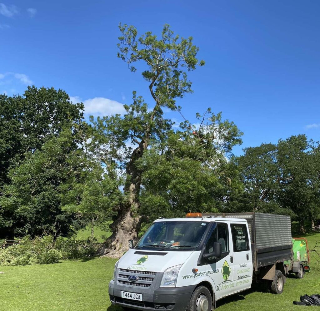 JC Arborists Leeds Tree Surgeons